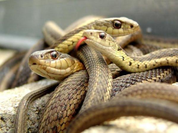 К чему снится блестящая змея