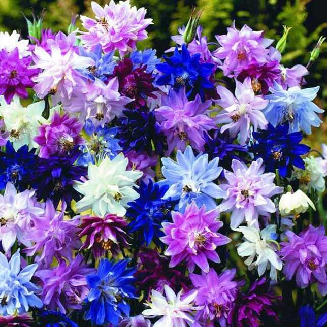 виды многолетних цветов фото возникало