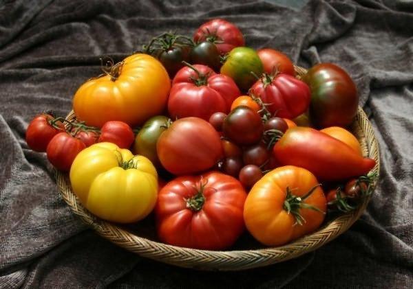 Разнообразие помидоров