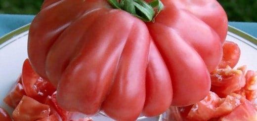 Изображение томата сорта Бычье сердце, syl.ru