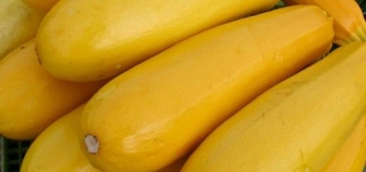 Изображение желтого кабачка, tikovka.net